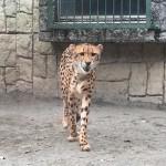 動物園で無邪気にはしゃぐアラサー